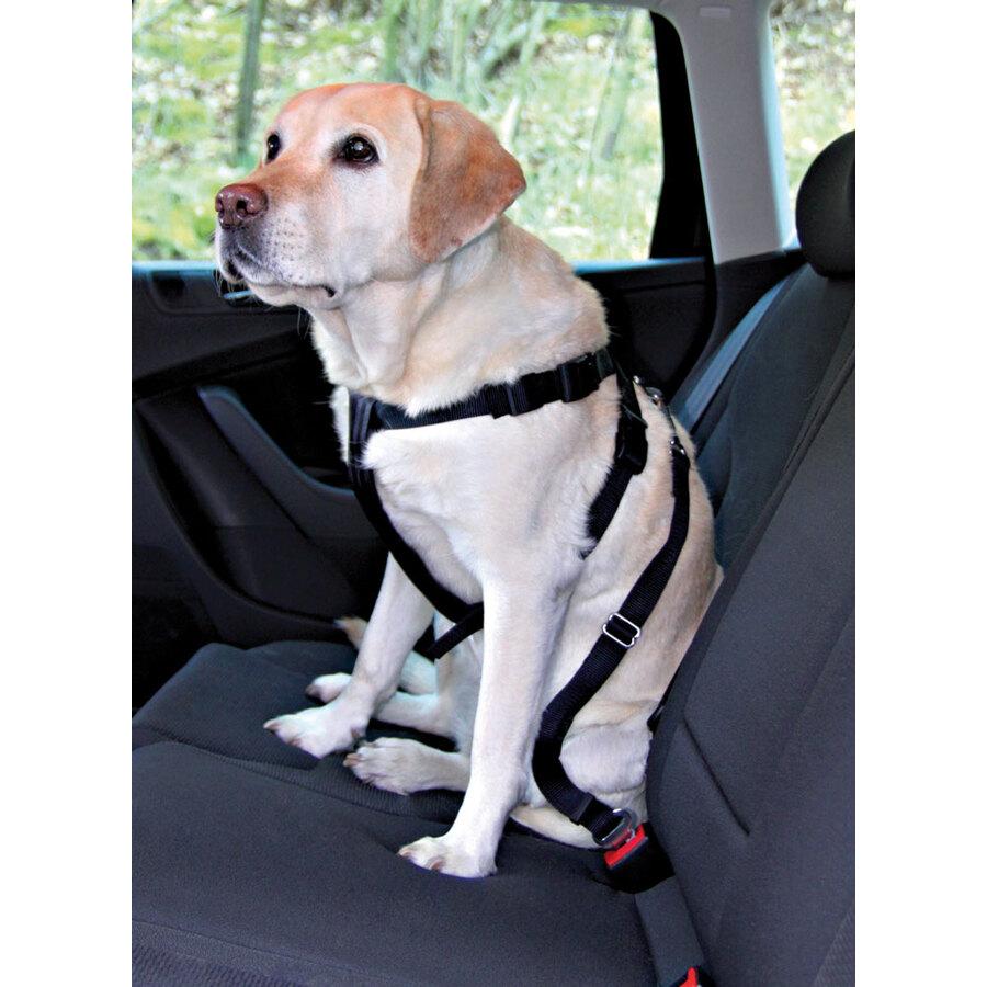 Cani e gatti cinture di sicurezza per cani for I cani youtube